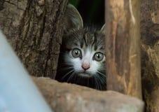 害怕的小逗人喜爱小猫掩藏 免版税图库摄影