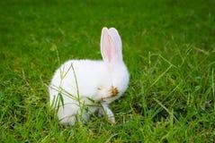 害羞小的兔子 免版税库存照片