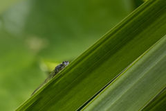 害羞的绿色蜻蜓 库存图片