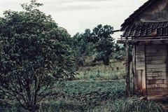 家在森林里 免版税库存照片