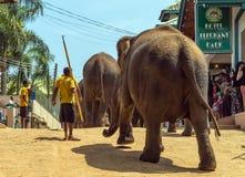 家庭亚洲大象浴在河锡兰, Pinnawala 免版税图库摄影