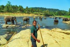 家庭亚洲大象浴在河锡兰Pinnawala 免版税库存图片