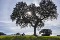 家庭享受自然在dehesa自然 库存图片