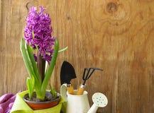 家庭从事园艺-花和草本 免版税库存图片