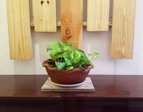 家庭内部风景的植物装饰 库存图片