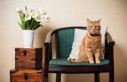家庭内部,猫 免版税库存照片