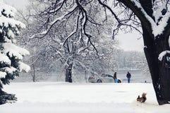 家庭在河附近的冬天公园,灰鼠在树下 免版税库存图片