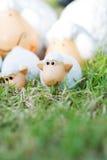 家庭在草甸的绵羊玩偶 免版税库存图片