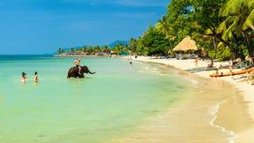 家庭在水和戏剧享受在热带海滩酸值张的暑假,游泳与大象 免版税库存图片