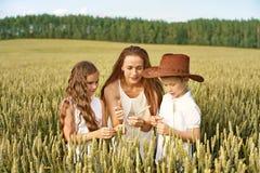 家庭妈妈和两个孩子男孩和女孩审查玉米穗在麦田的 免版税库存图片