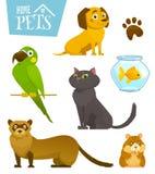 家庭宠物在白色,猫狗鹦鹉金鱼仓鼠白鼬,动画片传染媒介例证设置了被隔绝 免版税库存照片