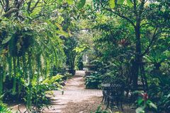 家庭室内装饰的热带英国庭院样式 库存照片
