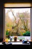 家庭宽窗口、黄色郁金香、膝上型计算机、后院庭院和运河,冷漠的天 库存照片