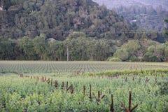 家庭拥有了葡萄园纳帕谷 图库摄影