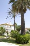 家庭棕榈树 免版税库存照片