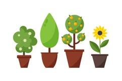 家庭植物和树例证 免版税库存图片