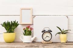家庭植物 免版税库存图片