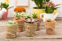 家庭植物 免版税库存照片