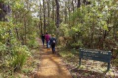 家庭步行在澳大利亚雨林里 库存图片