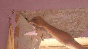 家庭维修服务 男性手剥落从墙壁的桃红色老墙纸有特别小铲的 股票录像