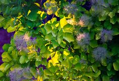 家庭菜园植物 免版税库存照片