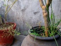 家庭菜园罐 免版税库存照片