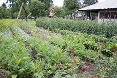 家庭菜园 库存照片