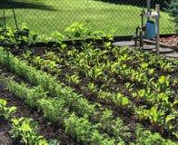 家庭菜园 免版税图库摄影