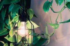 家庭装饰植物的样式 图库摄影