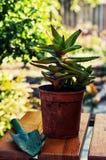 家庭装饰盆的植物 库存图片