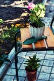 家庭装饰盆的植物 免版税库存图片