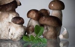 家庭观念-新鲜的健康母亲和孩子蘑菇等概率圆porcini牛肝菌蕈类可食用牛至草本和大蒜 库存照片