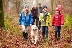 家庭走的狗通过冬天森林地