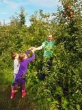 家庭采摘苹果在果树园 免版税库存图片