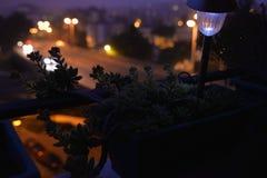 家庭阳台开花剪影,多汁植物花,夜场面,庭院灯 库存照片