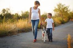 家庭 母亲和儿子走与狗 免版税图库摄影