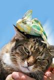 家猫关闭与在他的头的一个变色蜥蜴 库存照片