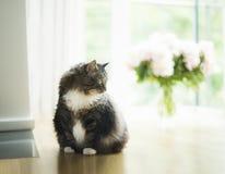 家猫在花大窗口和花束的客厅  免版税库存图片