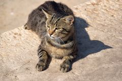 家猫,懒惰晴天,向被修补的街道扔石头 库存照片