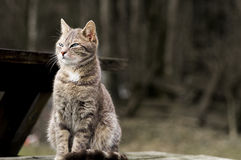 家猫001 库存图片