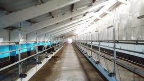 家畜在谷仓 股票视频