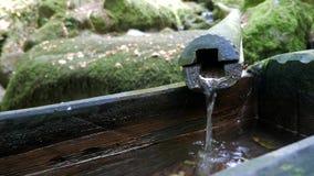 家畜来源是小河瀑布在夏天森林里 影视素材