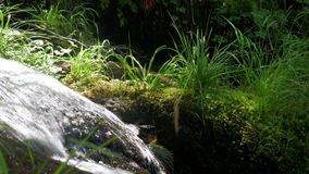 家畜来源是小河瀑布在夏天森林里 股票视频