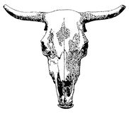 家畜头骨。 图库摄影