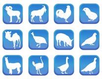 家畜2 库存照片