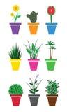 家的植物 免版税库存图片
