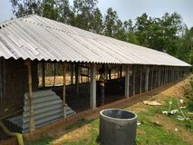 家禽场结构 库存照片