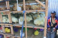 家禽 免版税库存图片