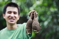 家种的木薯 免版税库存照片