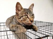 家养的棕色猫 免版税库存图片